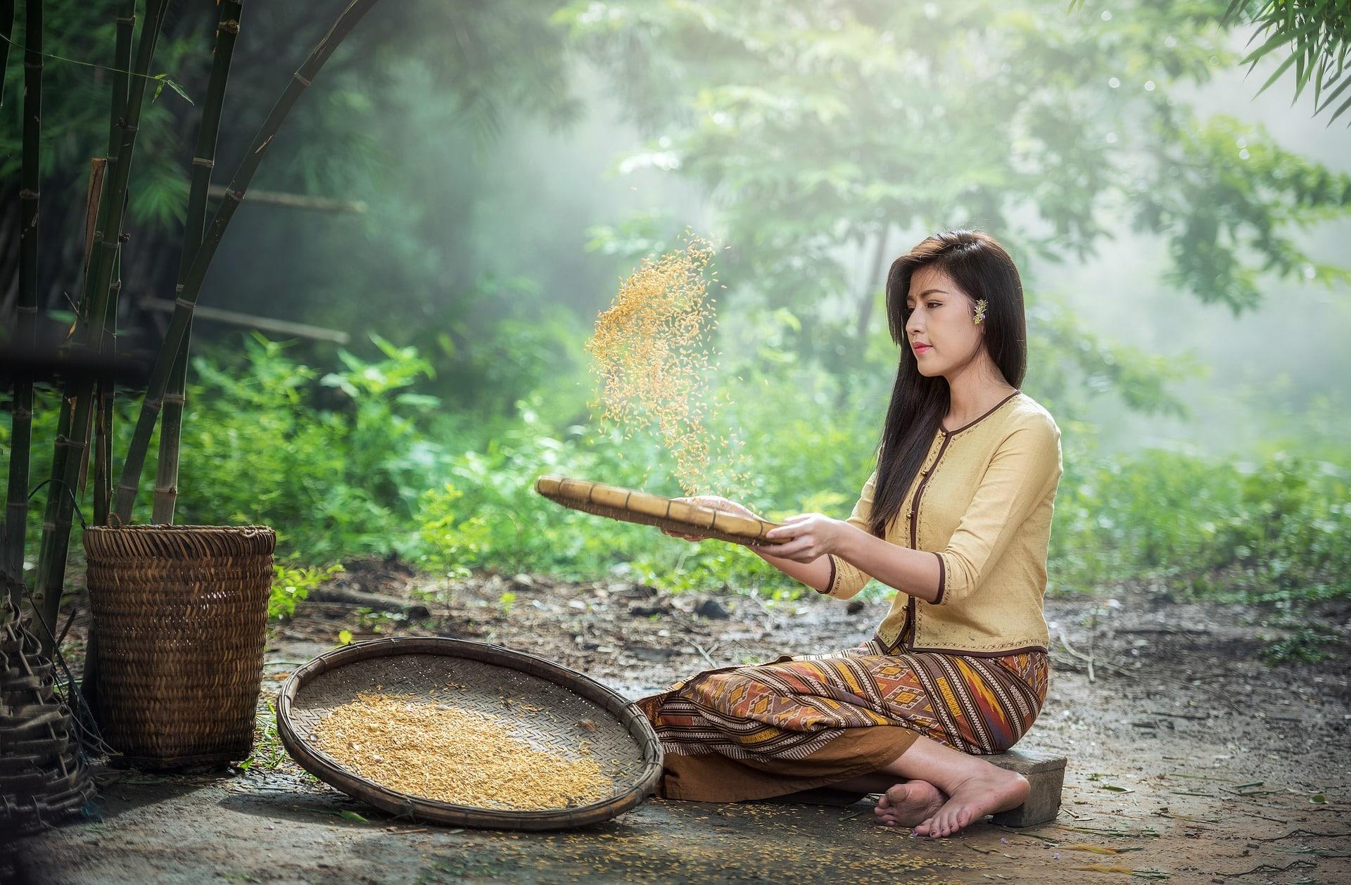 תה ואורז יש בסין